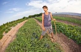 jovenes-agricultura