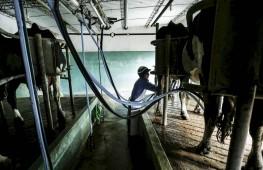 Homem trabalha em um estábulo em um subúrbio de Libertad, Uruguai. Foto: Andres Stapff/Reuters